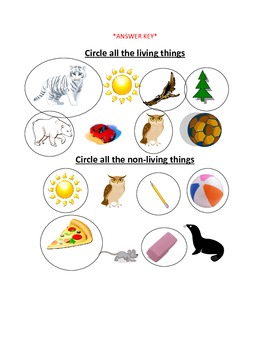 Living and Non-living things worksheet