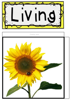 Living and Nonliving BeeBot Mat