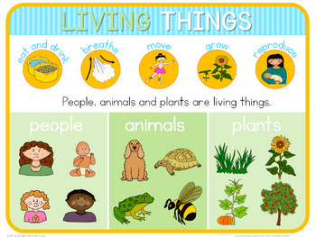 Living and non living  poster