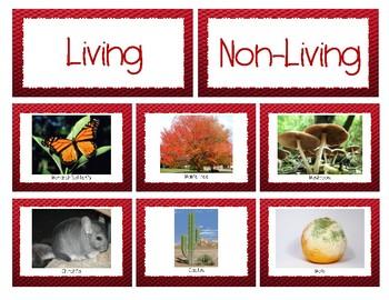 Living vs. Non-Living - Meet Mrs. Gref