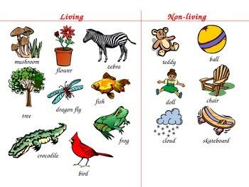 Living vs. Non-Living Sort
