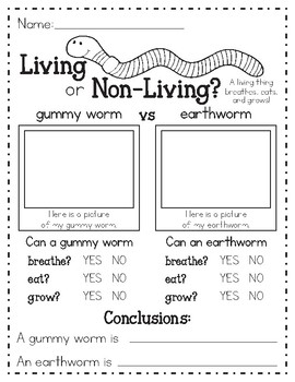 Living vs Non Living Worm Science Investigation