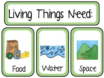 Living and Nonliving Science Resources, Sorts, and Worm Investigation