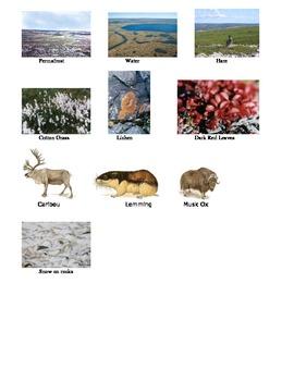 Living/Nonliving Tundra Sort