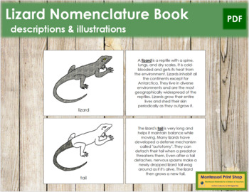 Lizard Nomenclature Book