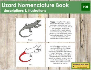 Lizard Nomenclature Book - Red