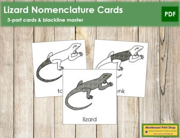 Lizard Nomenclature Cards