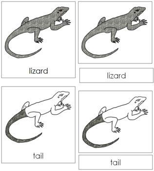 Lizard Nomenclature Cards