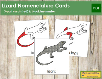 Lizard Nomenclature Cards (Red)