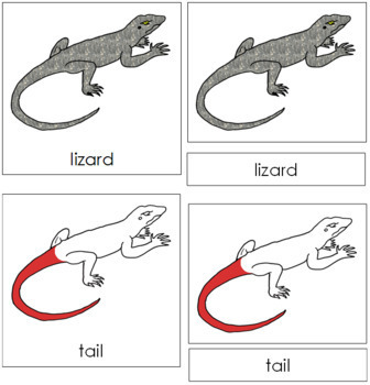 Lizard Nomenclature Cards (Red)