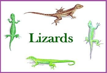 Lizards - Realistic Clip Art