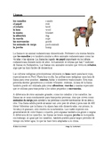 Llamas Cultura y lectura:  Latin American Animal Spanish Reading / Incans