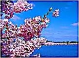 Llegó la primavera (Spring is here) Coloring Book