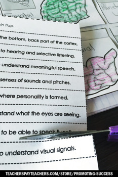 Lobes of the Human Brain, Human Body Systems Interactive Notebook 5th Grade
