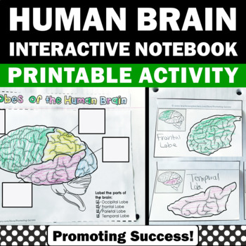Lobes of the human brain activity human body systems interactive lobes of the human brain activity human body systems interactive notebook ccuart Choice Image