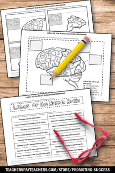 Lobes of the Human Brain Activity, Science Interactive Notebook