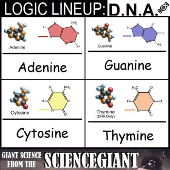 Logic Line-Up: DNA base pairs