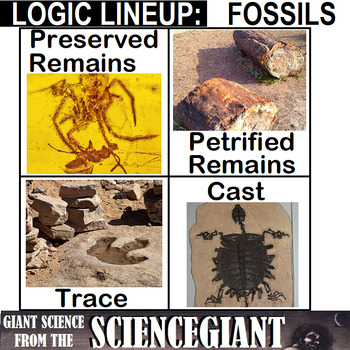 Logic LineUp: Fossils (Preserved Remains, Petrified Remains, Trace and Cast)