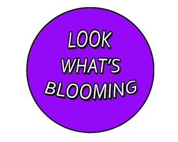 Look What's Blooming Spring Activity