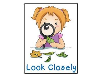 Looking Closely Flow Map Kindergarten