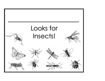 Looking for Insects Booklet