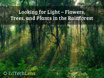 Looking for Light – Flowers, Trees, and Plants in the Rainforest EPUB