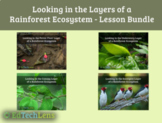 Looking in the Layers of a Rainforest Ecosystem - Lesson B