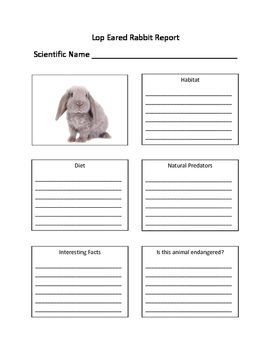 Lop Eared Rabbit Fill in the Blank Animal Report Worksheet