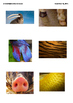 Los Animales Unit Packet flash cards