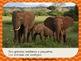 """""""Los Animales del Zoológico"""" – Songbook Mp3 Digital Download"""