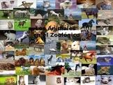 Los Animales en el Zoológico lección para los niños