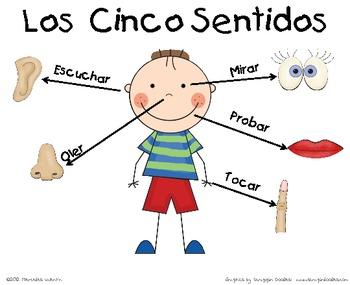 Los cinco sentidos poster by mercedes valentin davila tpt for Mural de los 5 sentidos