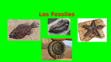 Los Fosiles