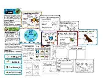 Insectos - Unidad de estudio (ciencias, matemáticas, español)
