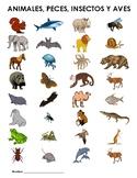 Los animales salvajes - Partes del cuerpo, habitat, comida, acciones - Worksheet