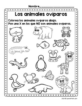 Los animales oviparos (Oviparous Animals in Spanish)