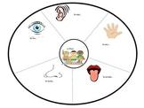 Los cinco sentidos en la playa:  Circle Map 5 senses at the beach in Spanish