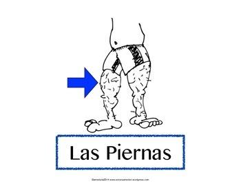 Las partes del cuerpo, Spanish flashcards, Classroom signs