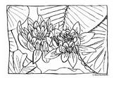 Lotus Coloring Page