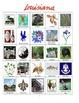Louisiana Bingo:  State Symbols and Popular Sites