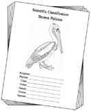 Louisiana State Bird Notebooking Set (Brown Pelican)
