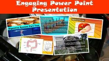 Lower Digestive System No Prep Lesson w/ Power Point, Work Page and Word Search
