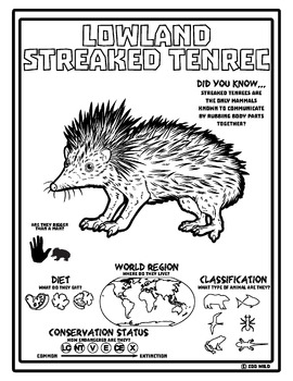 Lowland Streaked Tenrec -- 10 Resources -- Coloring Pages, Reading & Activities