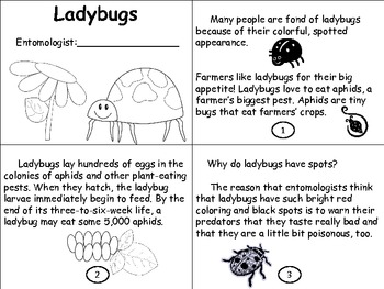 Lucky Ladybugs (a science unit on the life cycle of ladybugs)
