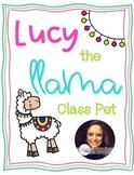 Lucy the Llama Class Pet