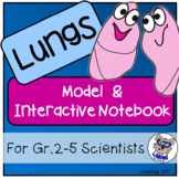Lungs : Model and Interactive Notebook