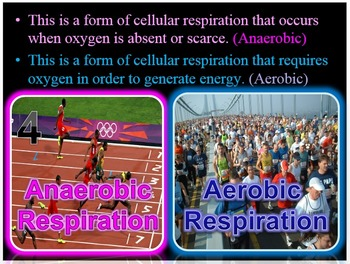 Lungs, Respiratory System PowerPoint Quiz Game