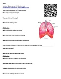 Lungs and the Respiratory System