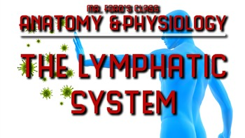 Lymphatic System: Anatomy and Physiology