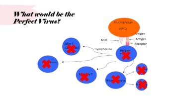 Lymphatic System & Immunity Complete Lesson (PowerPoints and Assessments)